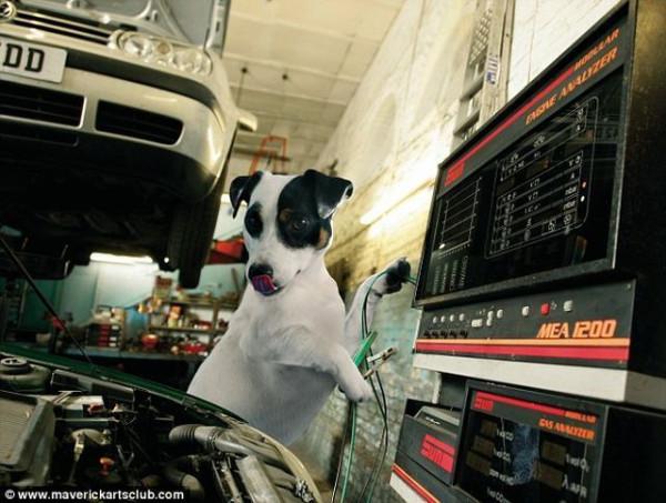 funy_dogs_mechanics_011