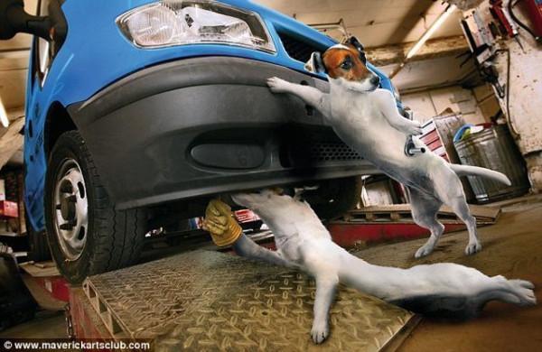 funy_dogs_mechanics_012