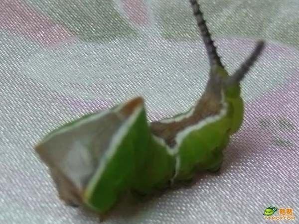 zelenoe_nechto_006