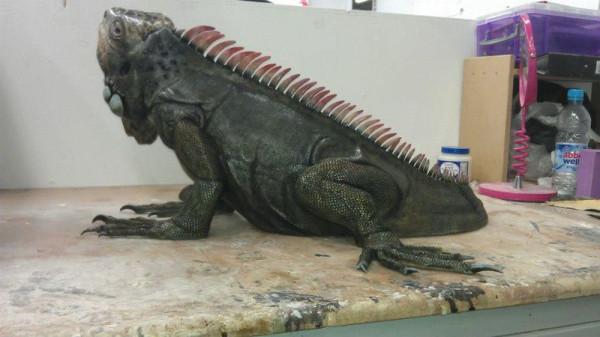 iguana-0018