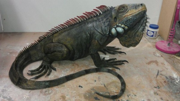 iguana-0020