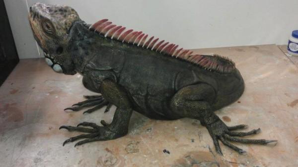 iguana-0021