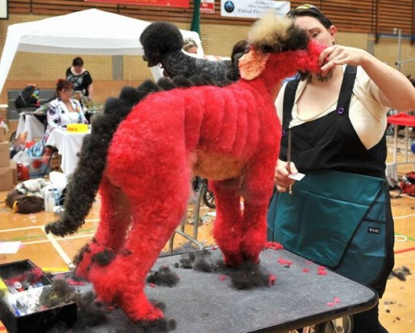 creative_dog_grooming_01
