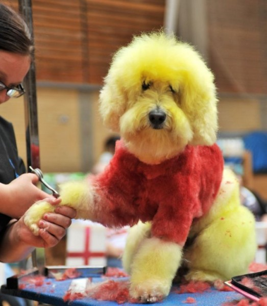 creative_dog_grooming_04