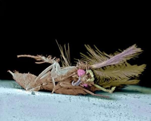 squashed_bugs_02