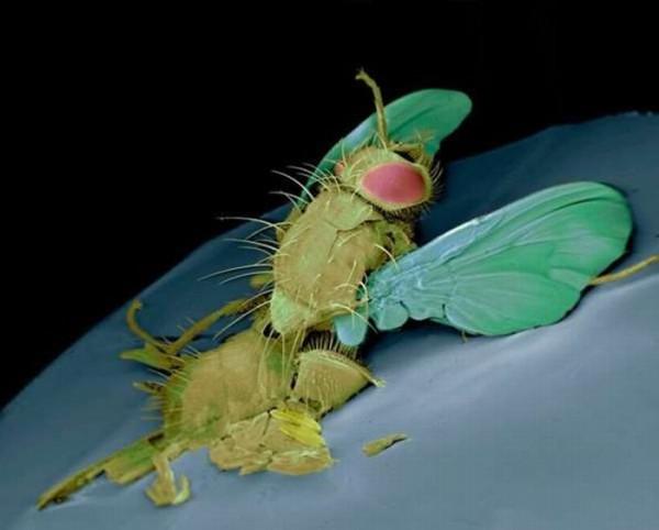 squashed_bugs_03