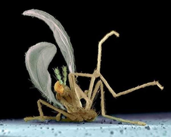 squashed_bugs_04
