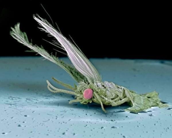 squashed_bugs_06