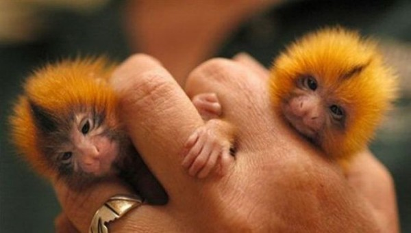 finger_monkeys_01
