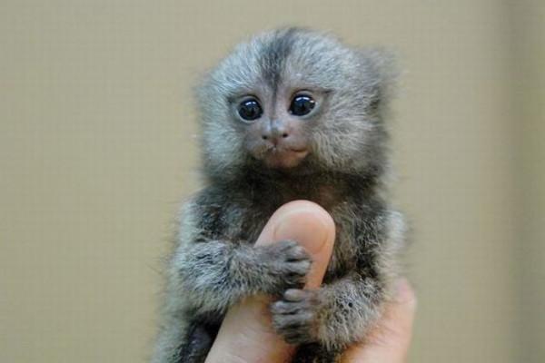 finger_monkeys_02
