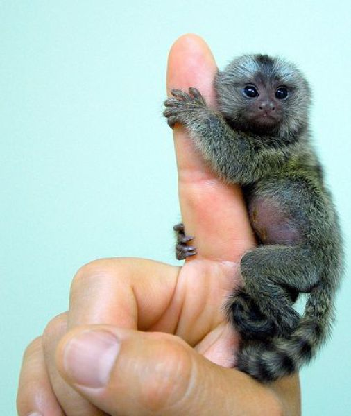 finger_monkeys_03