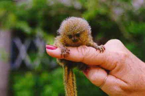 finger_monkeys_04