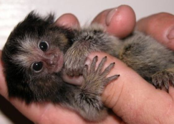 finger_monkeys_07