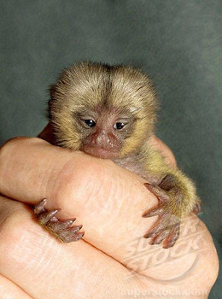 finger_monkeys_10