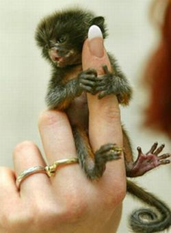 finger_monkeys_12