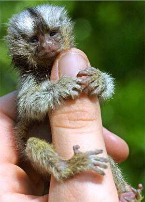 finger_monkeys_13