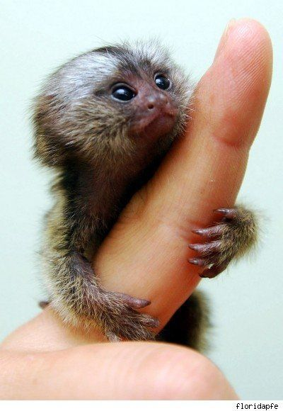 finger_monkeys_14