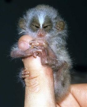 finger_monkeys_15