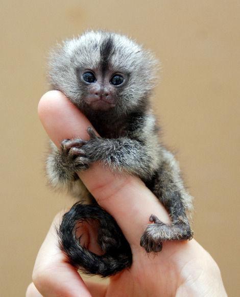 finger_monkeys_16