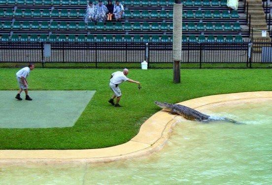 krokodil007