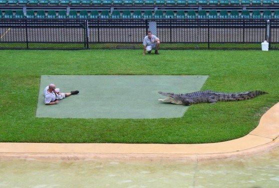 krokodil008