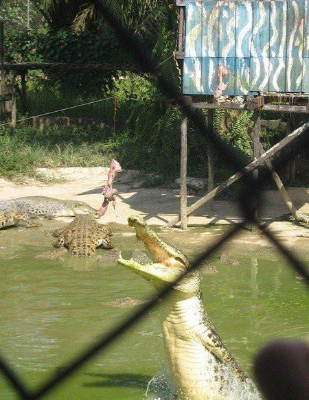krokodil016