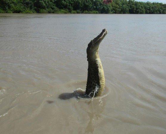 krokodil022