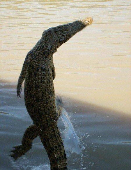 krokodil023