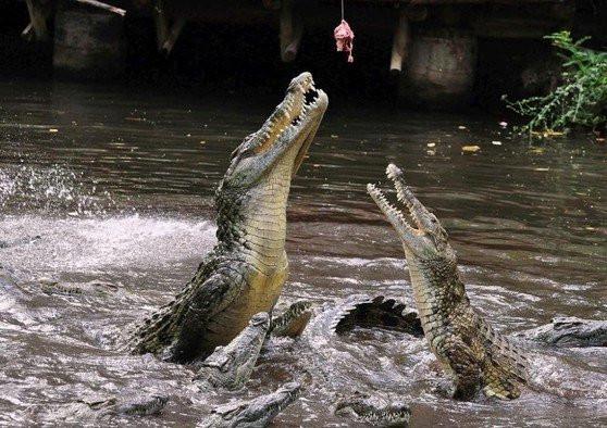 krokodil024