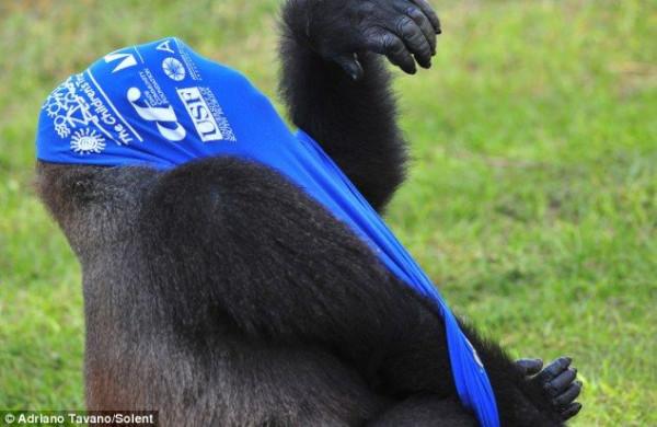 Gorilla_03