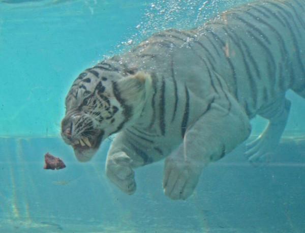 tigr004