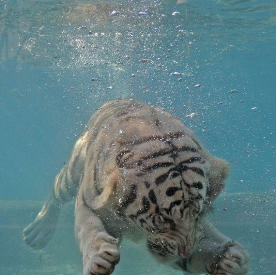 tigr007