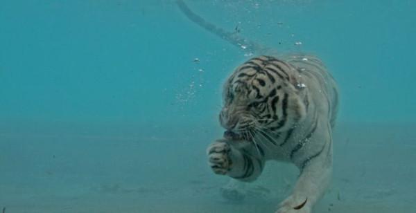 tigr008