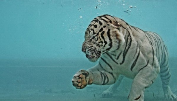 tigr010