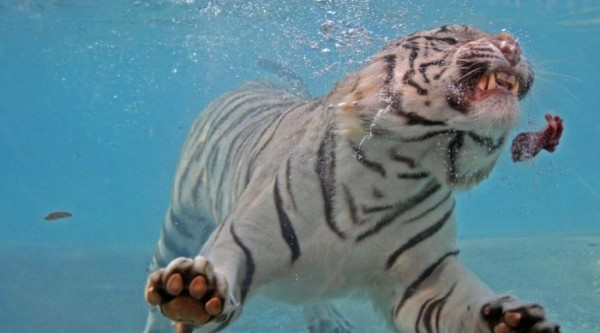 tigr014