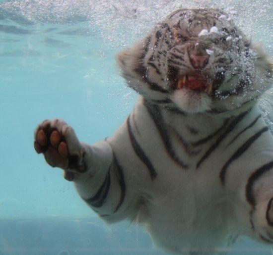tigr017