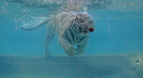 tigr026