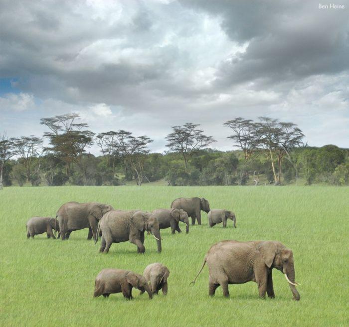 afrika022