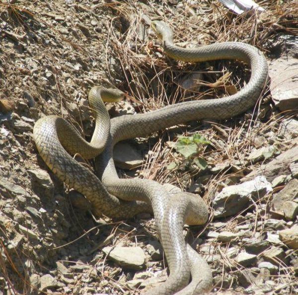 Секс со змием 18 фотография