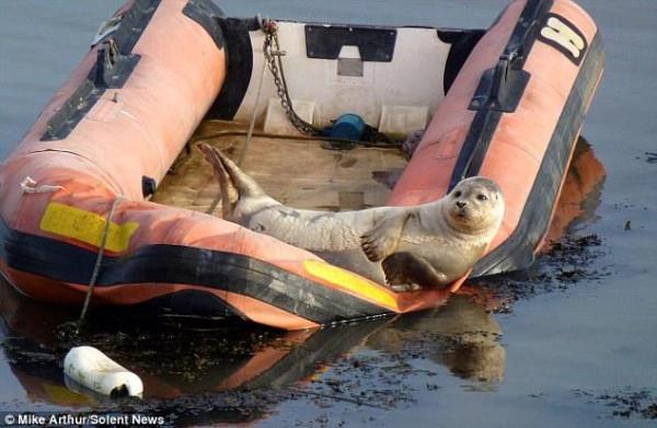 Seal_03