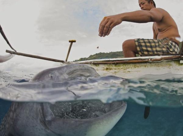 Shark_03