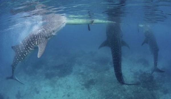 Shark_04