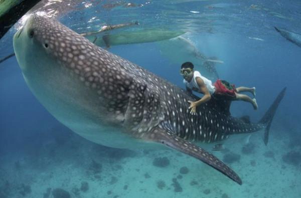 Shark_05