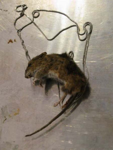 taxidermy-more-and-more-popular05