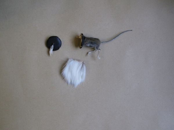 taxidermy-more-and-more-popular08