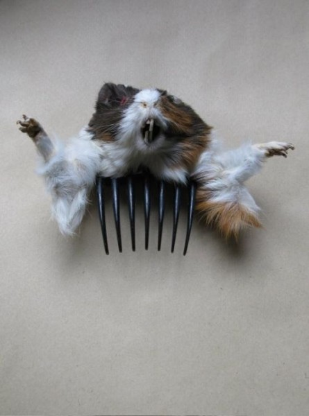 taxidermy-more-and-more-popular16