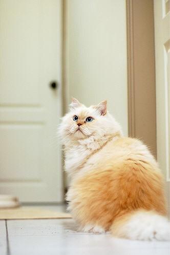 Cat_13