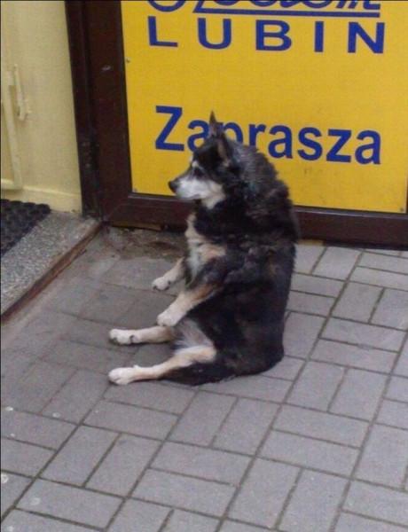 Sitt_dog_03