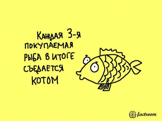 fakt-021
