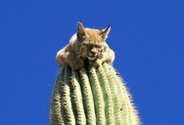kaktus-001